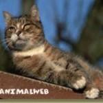 domesticcat